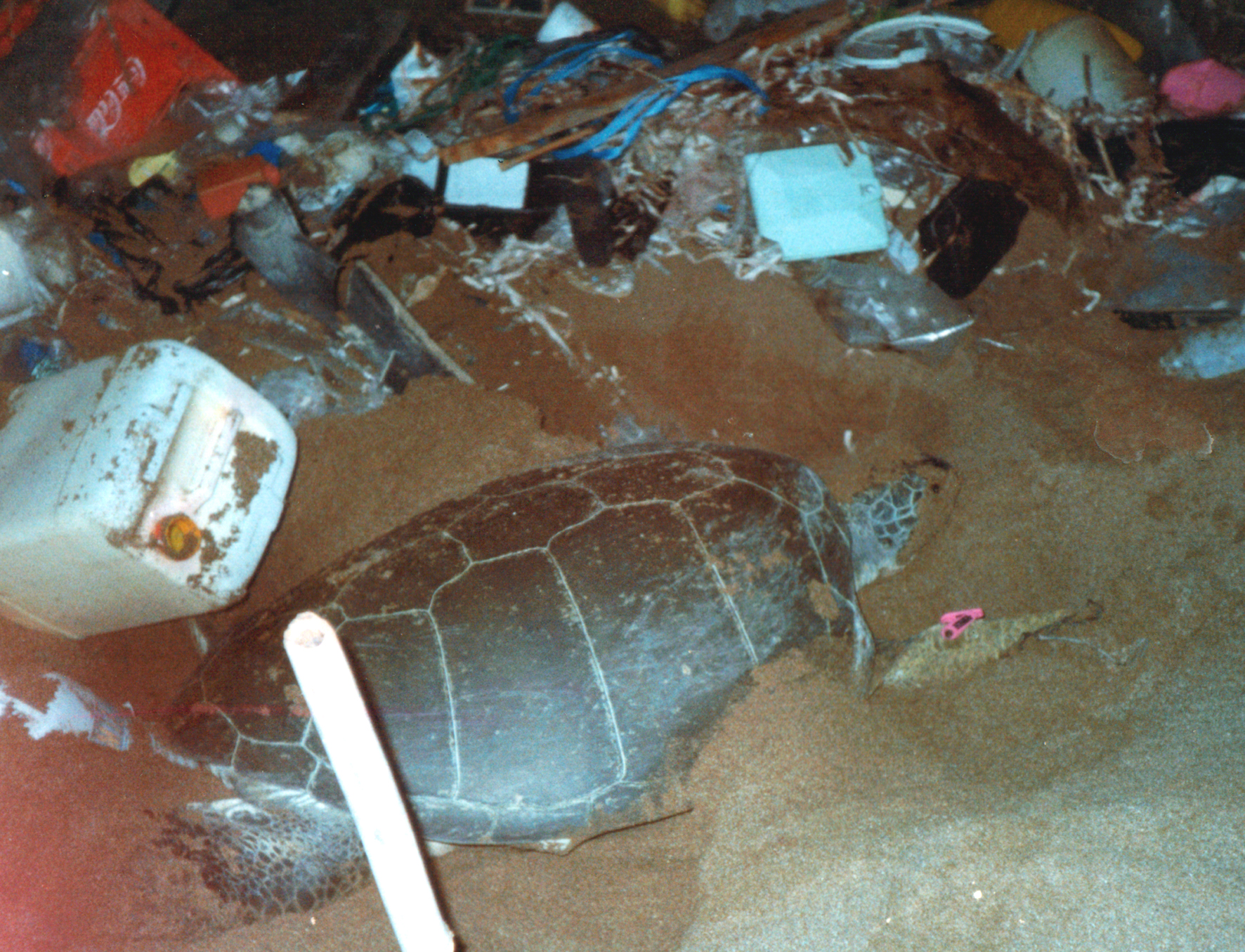 POTD: Green turtle attempting (and failing) to nest in rubbish on Alagadi Beach, Cyprus myd.as/p4014